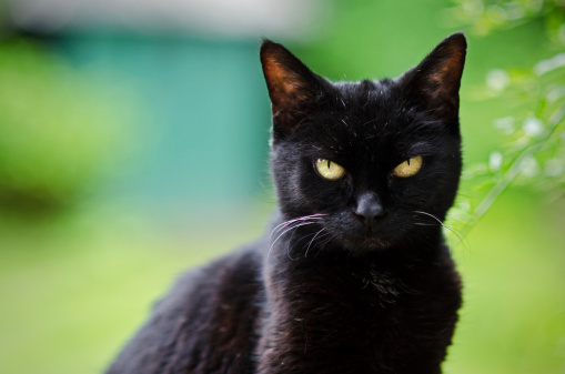 black-cat-outside.jpg?ff07fe62f2